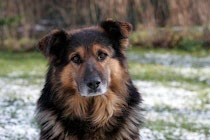 Schlagworte: Hund – 43. Photo: Hund Lux III
