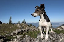 Schlagworte: Hund – 35. Photo: Am Geißalpsee