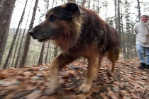 Schlagworte: Hund – 26. Photo: Laufend