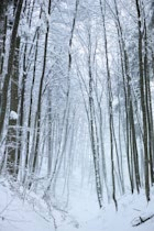 Schlagworte: Winter – 12. Photo: Hoher Winterwald