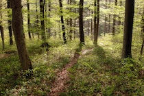 Schlagworte: Waldweg – 22. Photo: Waldeslicht