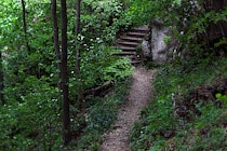 Walddetails: 39. Photo: Weg zur Treppe